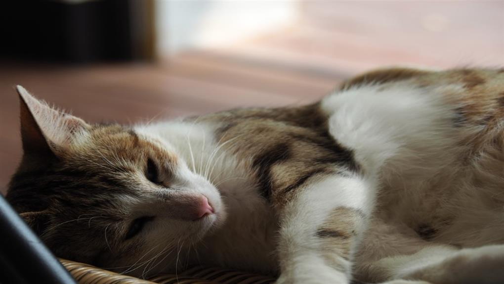 黑掉了?撿到貓想請假看獸醫  同事「冷回應」她PO網求救