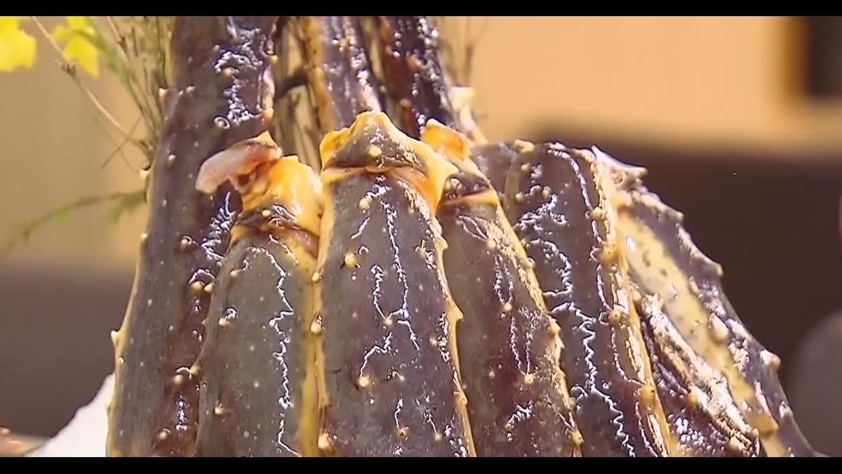 深海帝王蟹無限量供應 甜度、嫩度勝智利蟹
