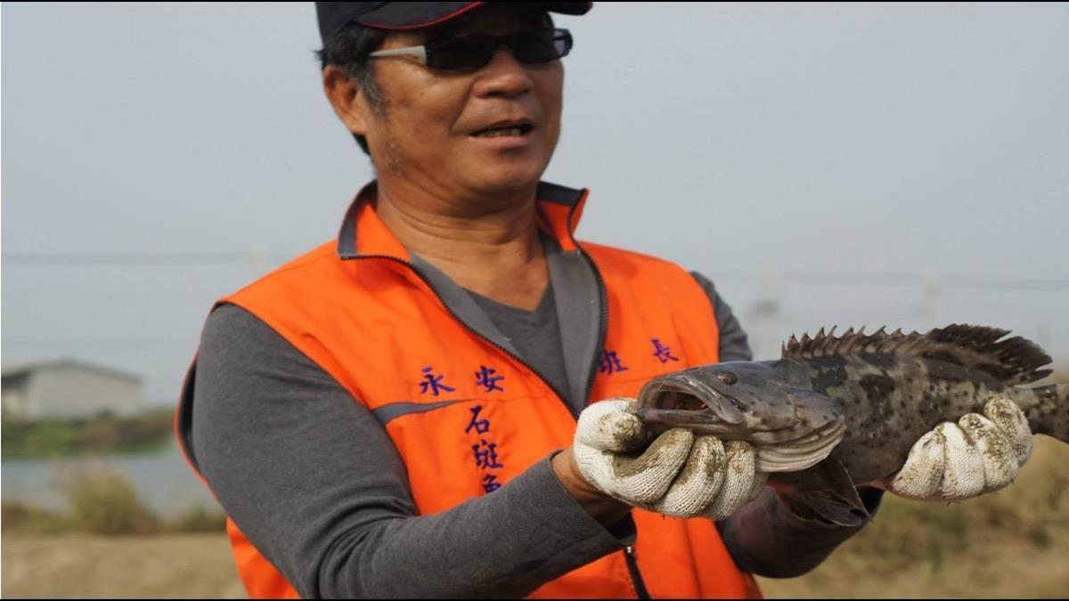 石斑魚也能保險?連續10小時攝氏10度以下就賠!