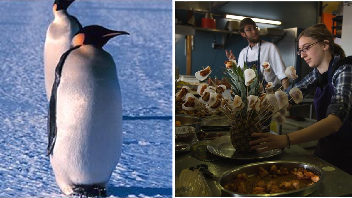 想和企鵝當鄰居嗎?極地科學站徵才 只要會做甜點就可以