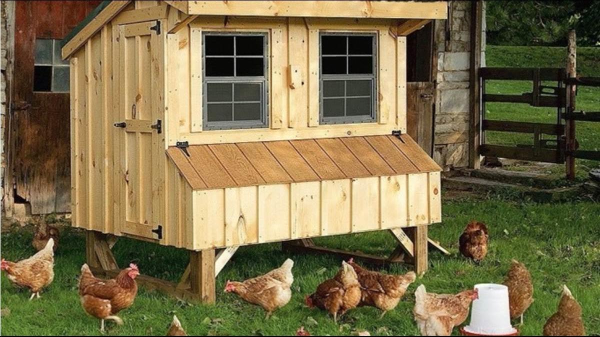 矽谷科技新貴瘋養雞 具說是身分地位的象徵