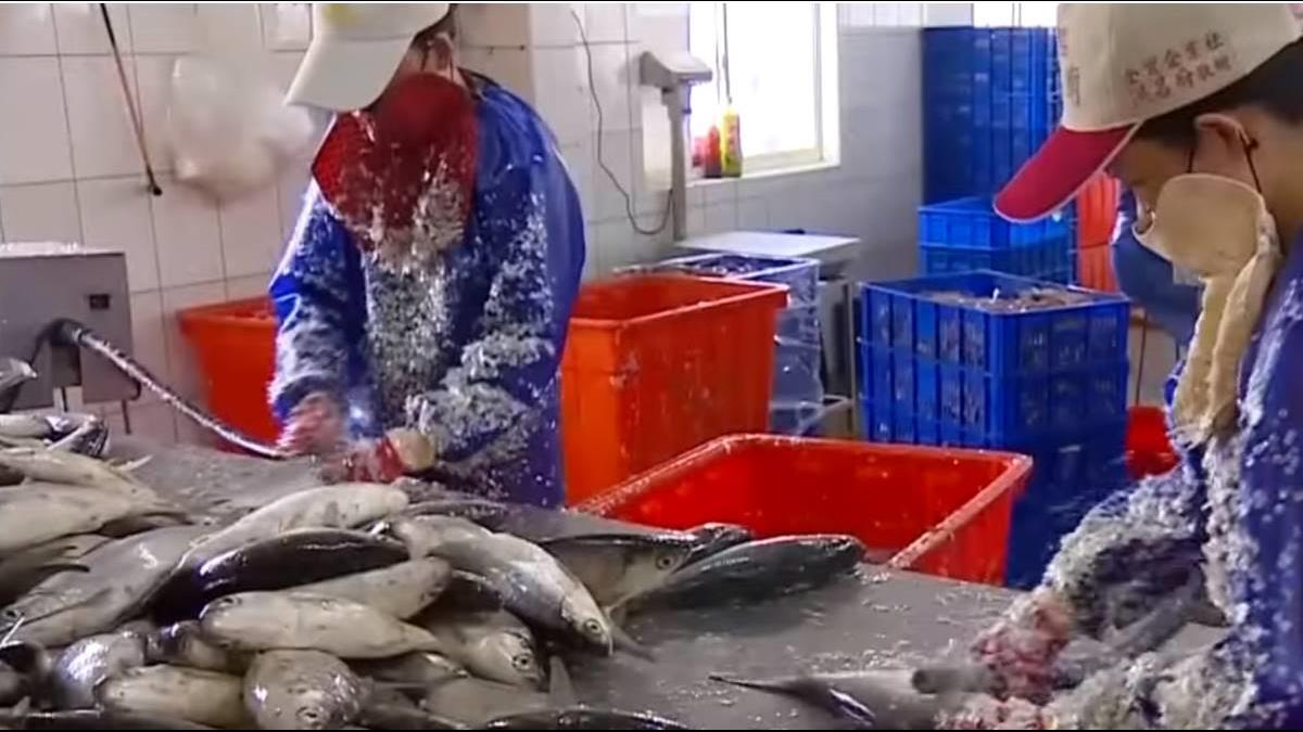 大陸市場掉了!虱目魚契作歸零 養殖戶改攻泰國