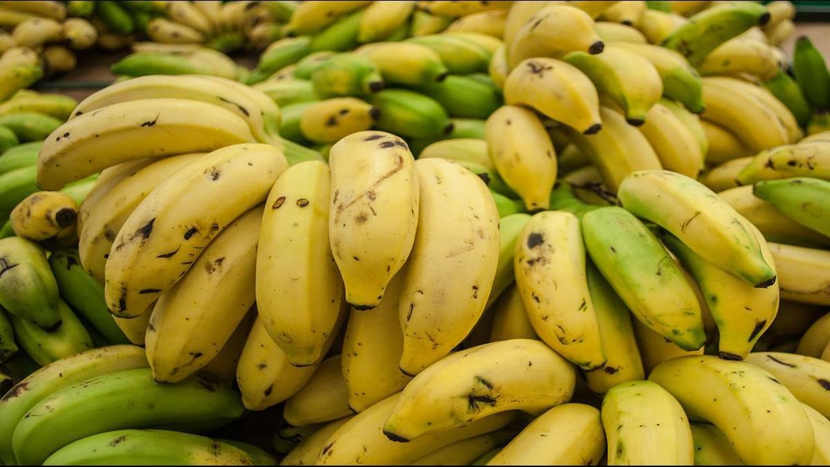 全民吃蕉救蕉價 青農無奈:政府護盤是下個悲劇的開始
