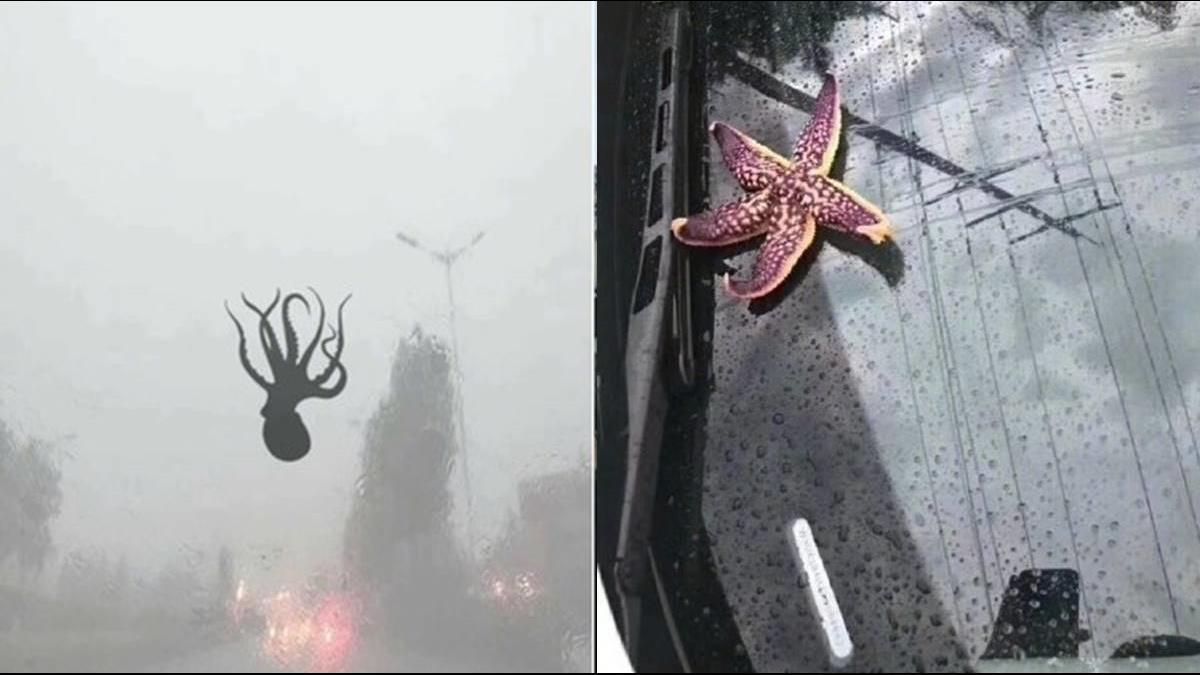 青島上合峰會剛結束就狂下冰雹「章魚、海星」從天而降