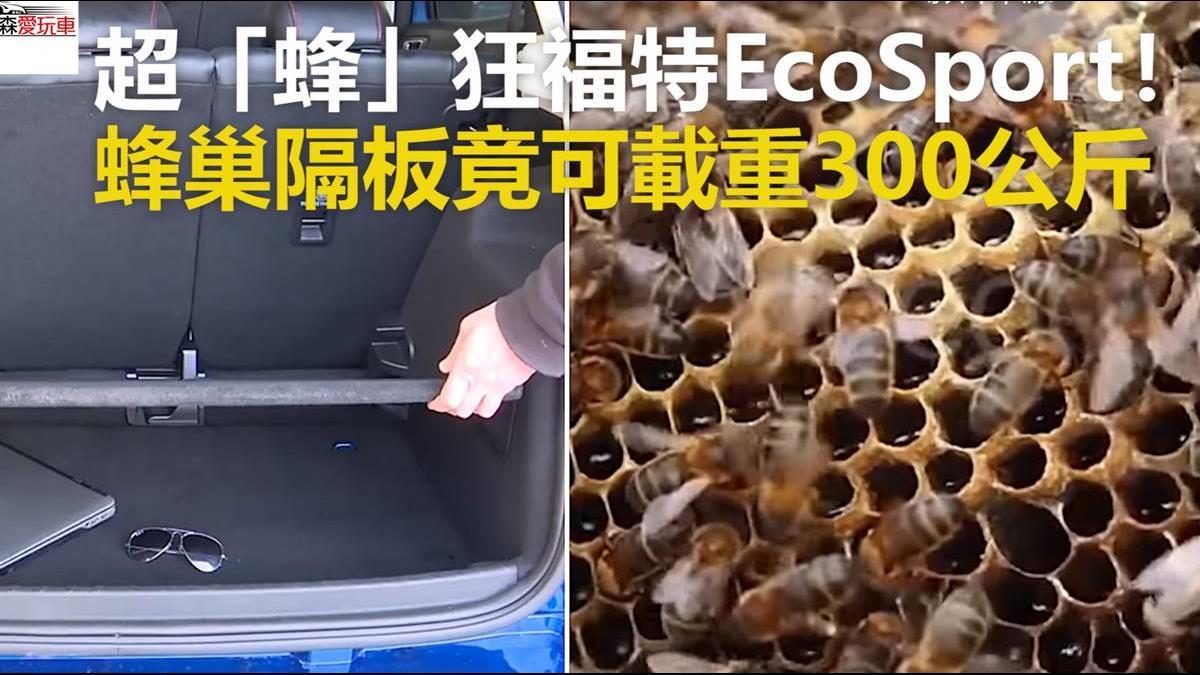 超「蜂」狂福特EcoSport! 蜂巢隔板竟可載重300公斤
