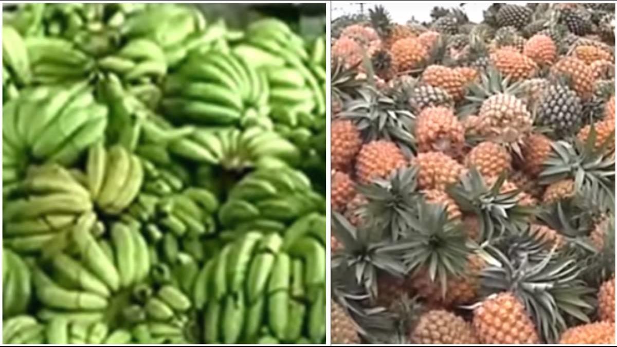 香蕉鳳梨有救?學者獻計:發給外國觀光客「水果折價券」
