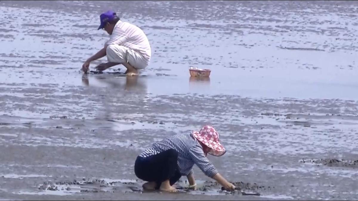 高美濕地可挖「蛤蜊」?陳年告示牌讓投訴人遭打臉