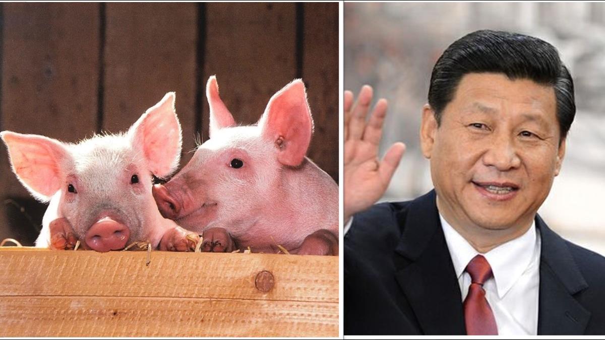 「4億隻豬被迫瘦身」陸拚貿易戰 將砍豬飼料蛋白質含量