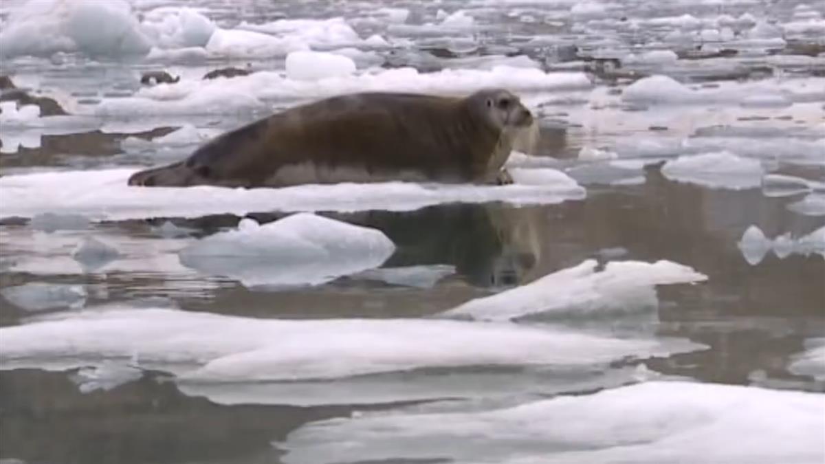 【影片】2030年升溫1.5℃破暖化大限? 聯合國警告:北極夏季恐無冰
