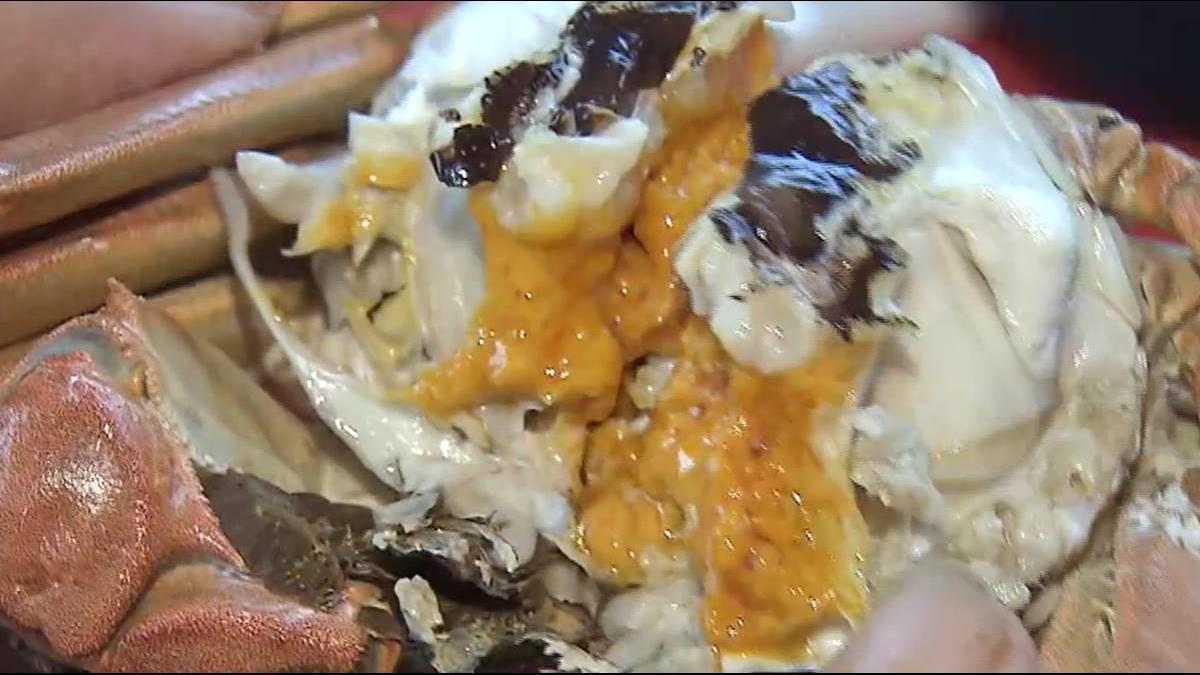 大閘蟹做冷泉SPA長大! 蟹膏濃郁留香