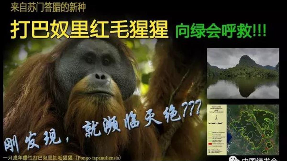 495億水壩敲響印尼猩猩的喪鐘!陸一帶一路再掀爭議