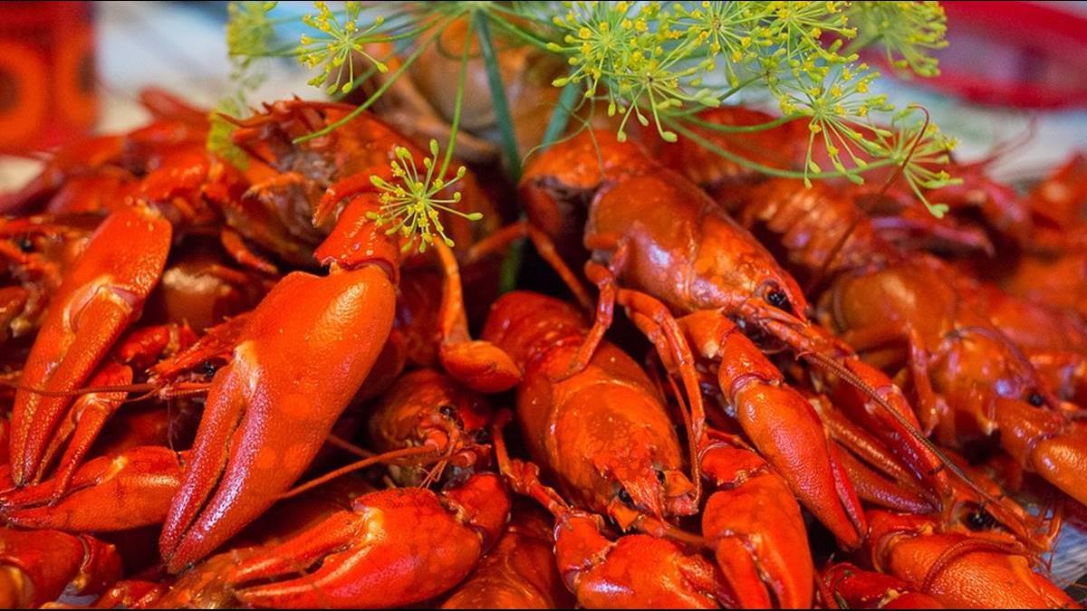 搶商機?陸小龍蝦市值飆1.2兆 台商將引進澳洲小龍蝦