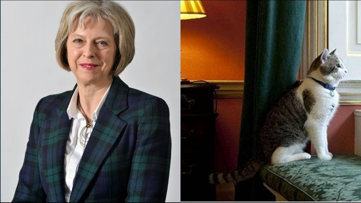 脫歐6難題考倒英國人!「首相第一貓」慵懶沒在怕?