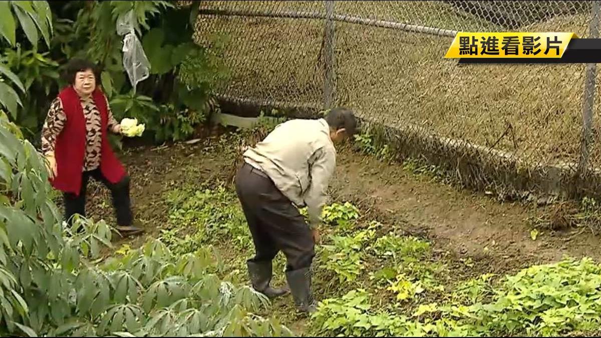 政府3度徵收「黃金變廢墟」 地主含淚種菜