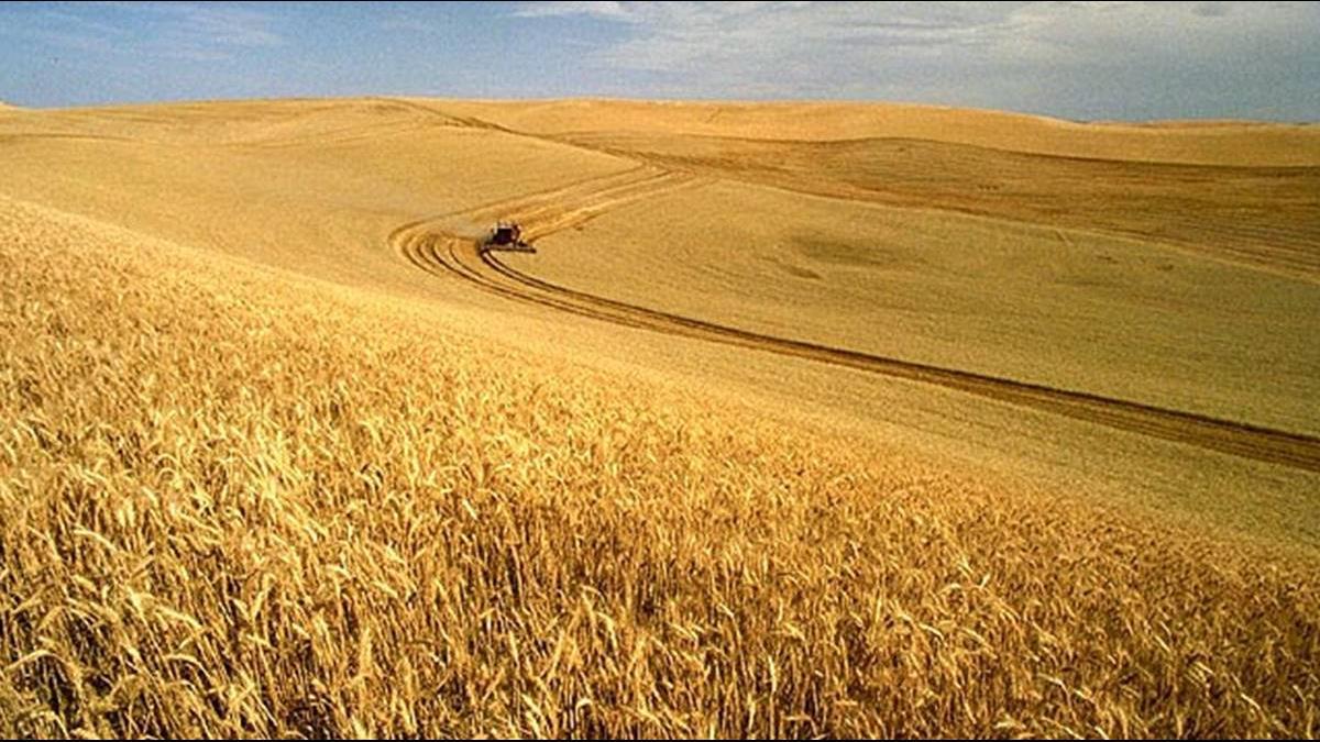 貿易戰終結有望? 傳陸將年增逾9千億買美農產品