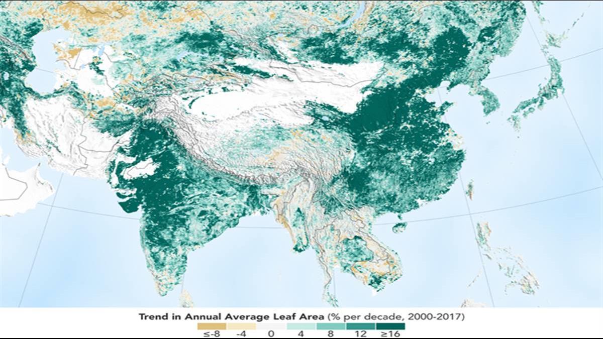 12小時種6600萬棵樹苗!這2國讓地球比20年前更綠