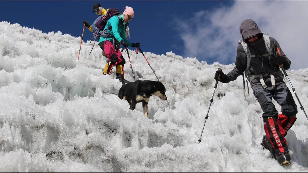 只靠爪子!史上第1犬勇登喜馬拉雅山7千米高峰