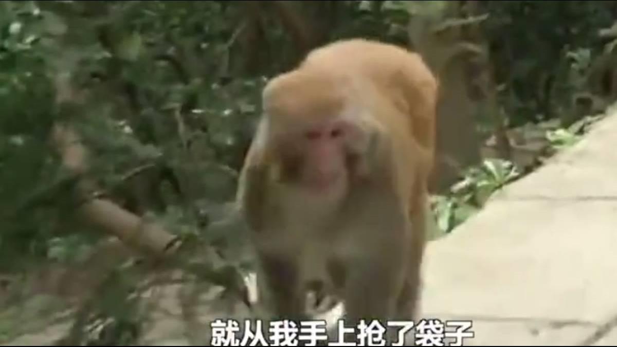 猴子不偷桃改搶手機?民警出招調解 結果GG了