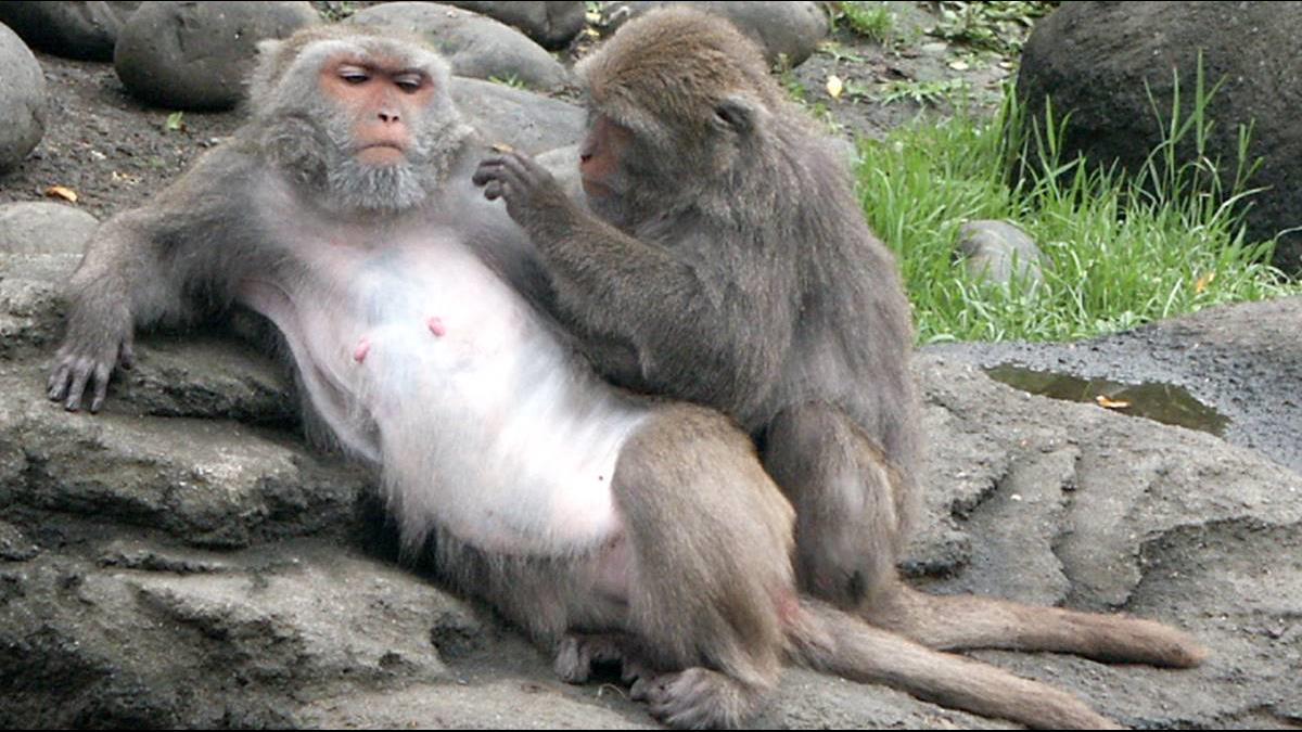 月薪23K徵驅猴人!台東這公所開出2工作內容