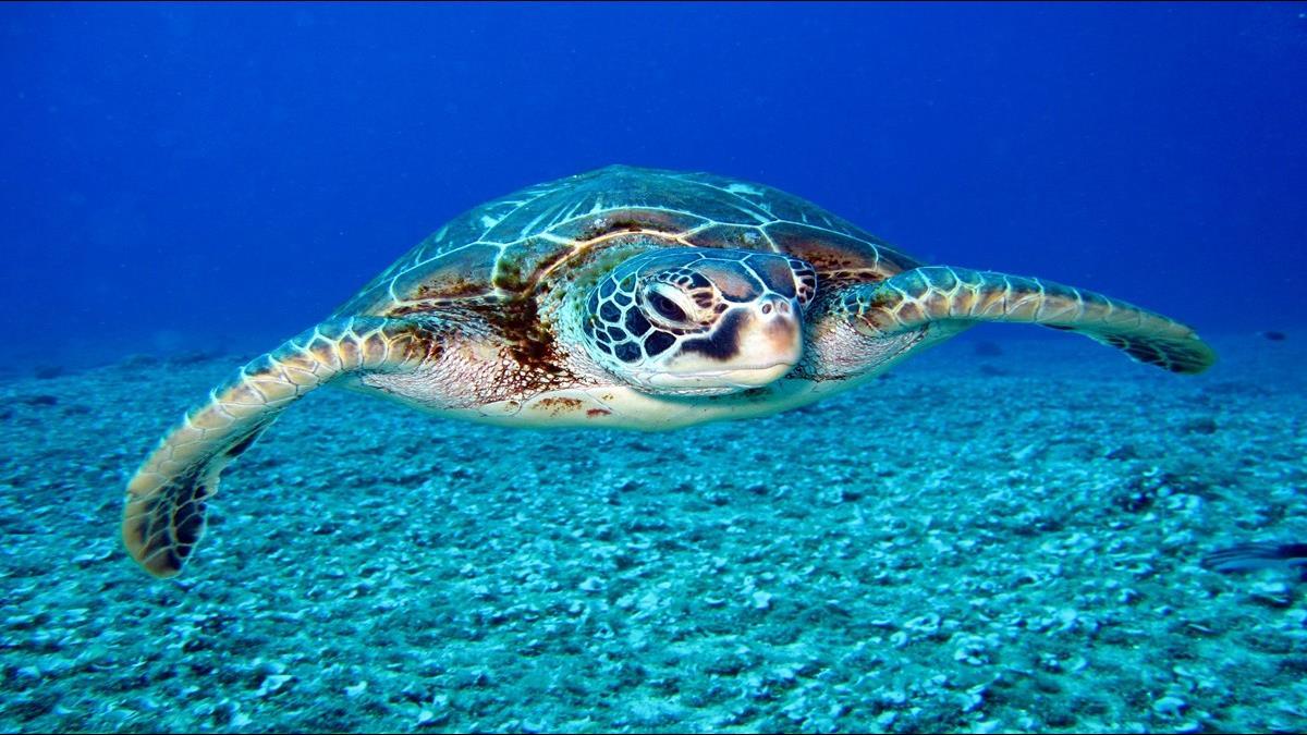 到小琉球看海龜更方便!高鐵首推2條交通聯票