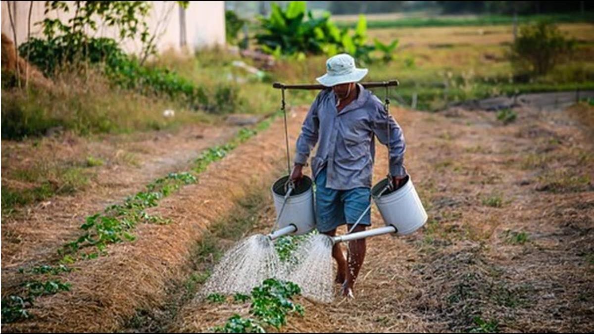 保費最高補助5成!政院拍板農業保險法草案