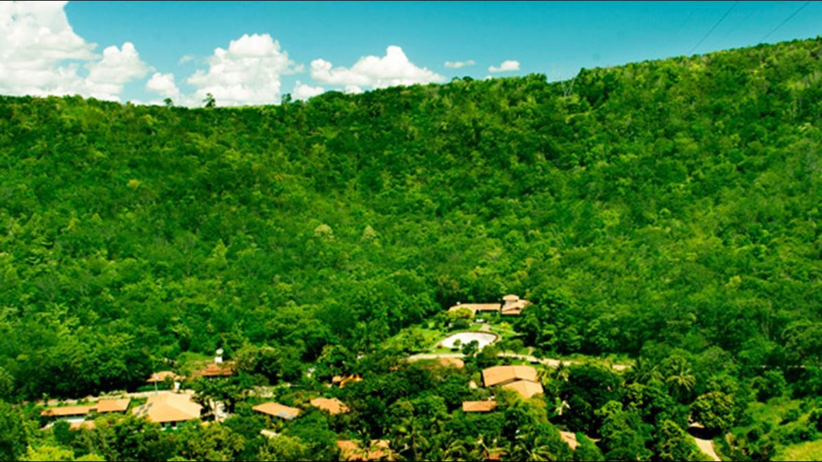 花20年重建!巴西夫婦將萬畝荒地變肥沃綠洲