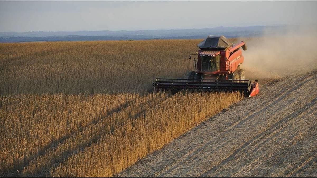 否認沒買美國農產品  中:227萬噸大豆已裝船