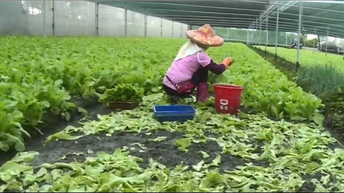 大雨災損! 菜價漲近1成、肉販:虧本賣