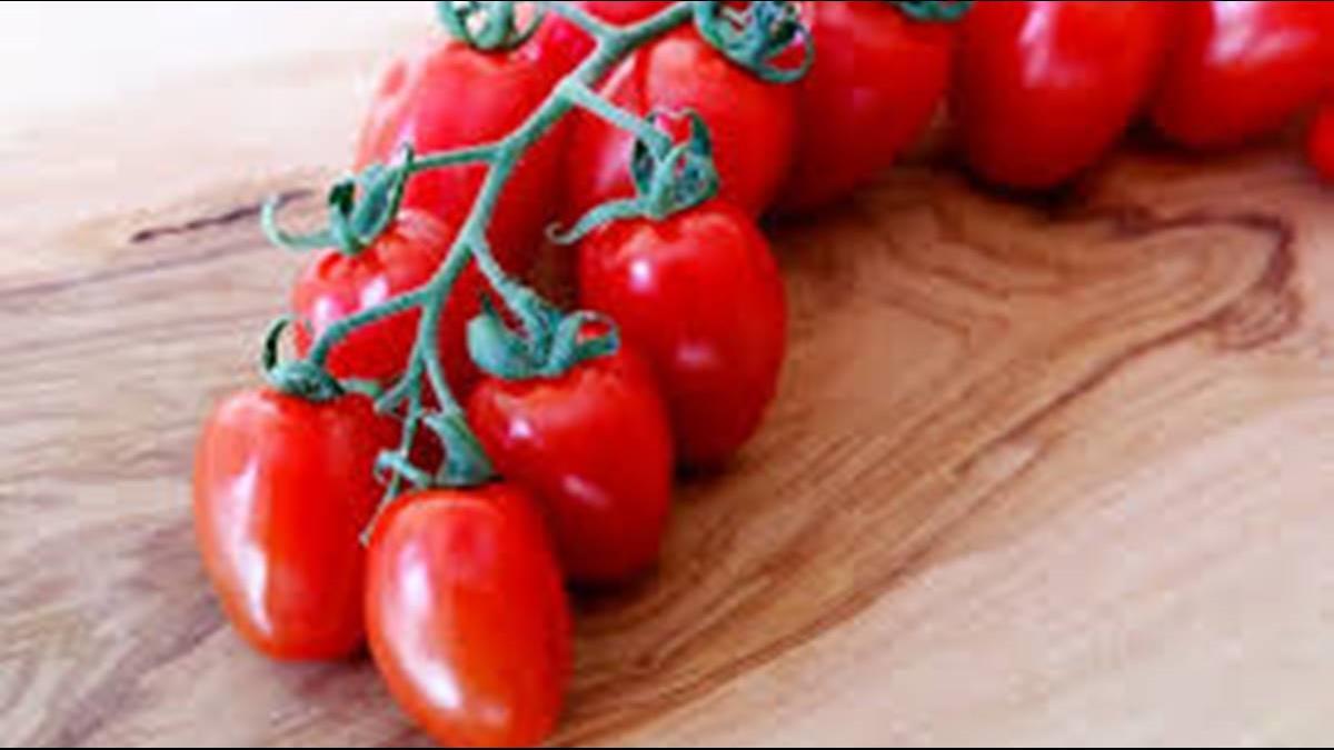 法國番茄出現「毀滅病毒」! 官員:擴散將承受重大經濟後果